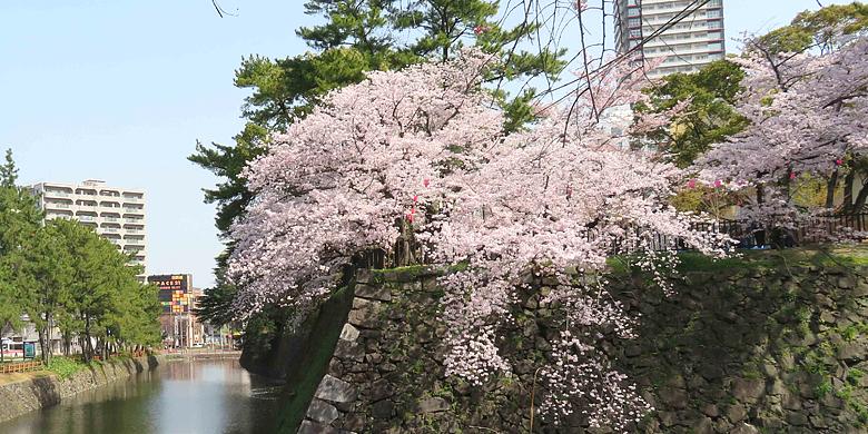 最高の「花観ていっぱい」満喫!in 小倉城 3月31日sat.